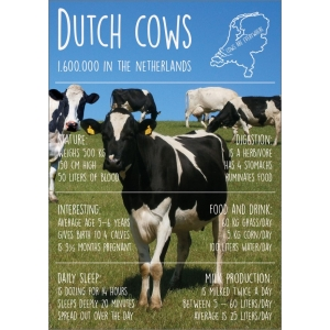 Dutch cows 11006